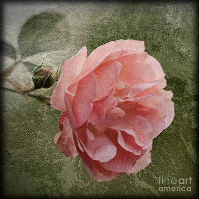 Photograph - Textured Pink Rose by Liz  Alderdice