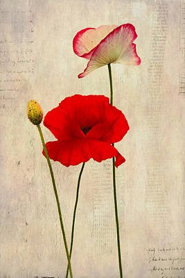 Laura James Photograph - Textured Poppies by Laura James