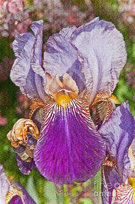 Photograph - Textured Purple Bearded Iris Flower by Valerie Garner