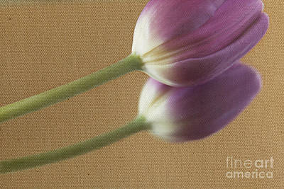 Textured Purpletulip Art Print