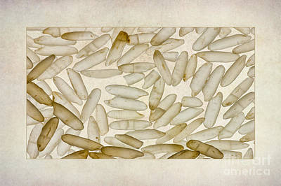 Textured Rice Grains Art Print
