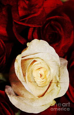 Photograph - Textured Roses by Erica Hanel