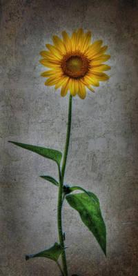 Textured Sunflower 1 Art Print by Lori Deiter