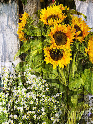 Photograph - Textured Sunflowers by Brenda Kean