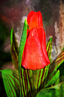 Photograph - Textured Twin Tulips by Mike Martin