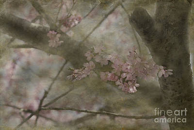 Abstract Graphics - Textures Of Spring by Arlene Carmel