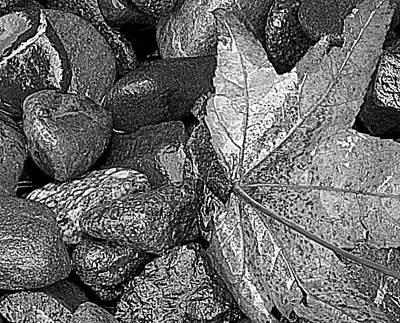 Photograph - Textures by Suzy Piatt