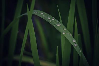 Thailand Morning Dew Original by David Longstreath