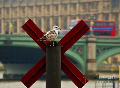Photograph - Thames Watchbird by Julie Clements