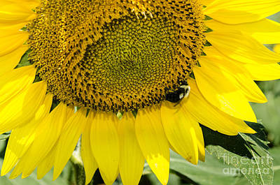 Photograph - Thank God For Sunflowers by Paul Mashburn
