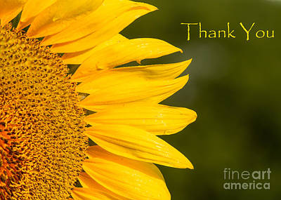 Photograph - Thank You Sunflower by Dale Nelson