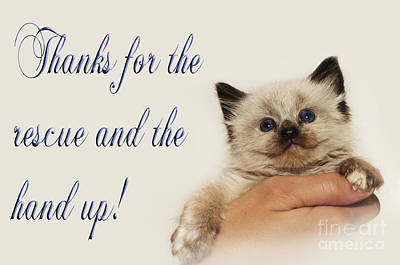 Andee Design Feline Photograph - Thanks For The Rescue And The Hand Up by Andee Design