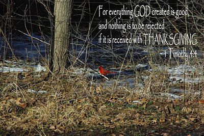 Photograph - Thanksgiving Cardinal by Robyn Stacey