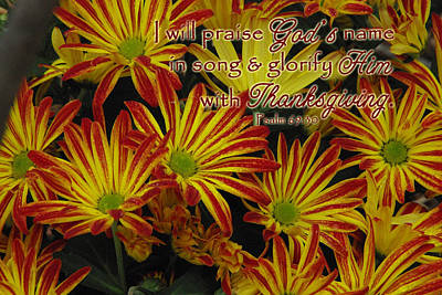 Photograph - Thanksgiving Mums Psalm 69 30 by Robyn Stacey