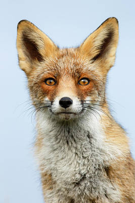 Vixen Photograph - That Foxy Face by Roeselien Raimond