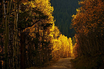 Photograph - That Golden Road by Jeremy Rhoades