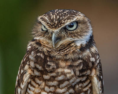 Photograph - That Not Pleased Look by Wes and Dotty Weber