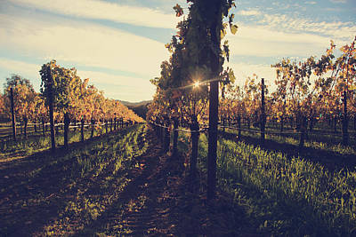 Wine Vineyard Photograph - That Special Glow by Laurie Search