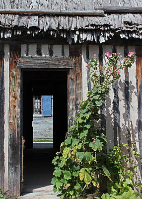 Photograph - Thatched Roof Door Plant 1 by Mary Bedy