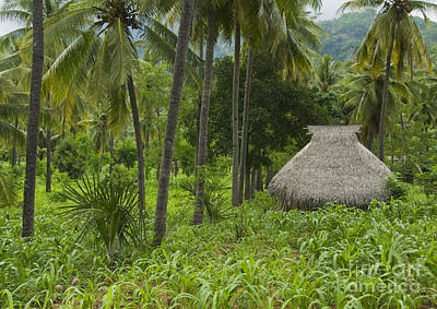 Photograph - Thatched-roof Hut On Atauro Island by Dan Suzio