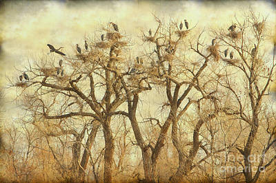 Bo Insogna Photograph - Thats A Lot Of Great Blue Heron by James BO  Insogna