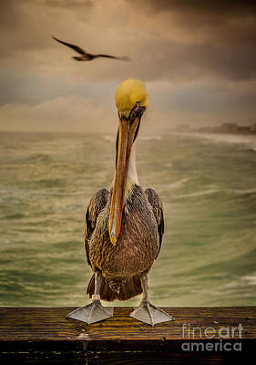 That's Mr. Pelican To You Art Print by Steven Reed