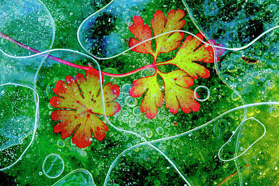 Red Geranium Photograph - Thaw by Andres Miguel Dominguez