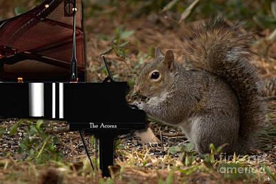 Photograph - The Acorn's Pianist by Sandra Clark