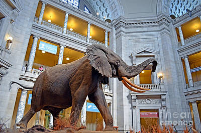 Photograph - The African Bush Elephant In The Rotunda Of The National Museum Of Natural History by Jim Fitzpatrick