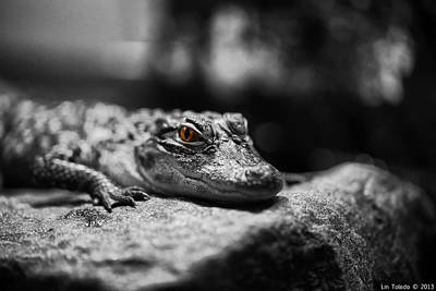 The Alligator's Eying You Art Print by Linda Leeming