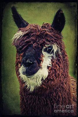 Camel Mixed Media - The Alpaca  by Angela Doelling AD DESIGN Photo and PhotoArt