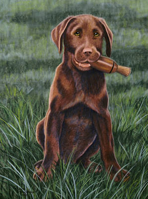 Puppy Drawing - The Amateur by Debbie Stonebraker