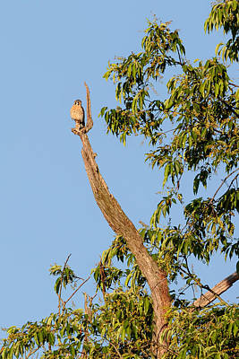 The Photograph - The American Kestrel by Bill Wakeley