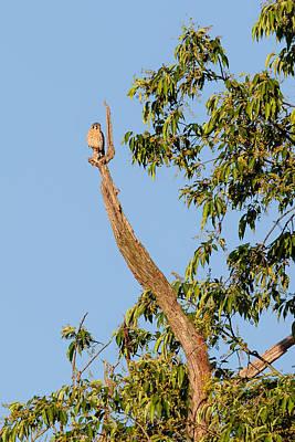 Hawk Photograph - The American Kestrel by Bill Wakeley