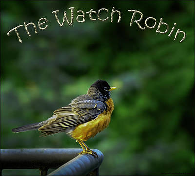 Lake Michigan Photograph - The American Watch Robin by LeeAnn McLaneGoetz McLaneGoetzStudioLLCcom