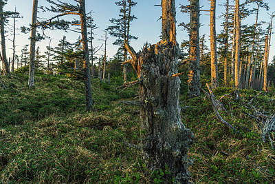Haida Gwaii Photograph - The Ancient Forests Of Naikoon by Robert Postma