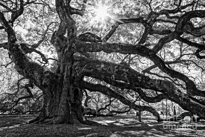 The Angel Oak Bw Art Print by Deborah Scannell
