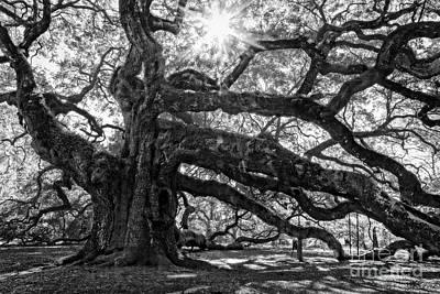 The Angel Oak Bw Art Print