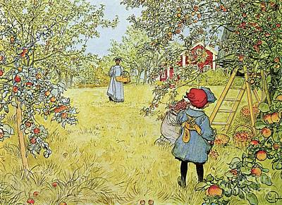 Harvesting Painting - The Apple Harvest by Carl Larsson