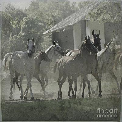 The Arabian Horses Fairytale Art Print by Angel  Tarantella