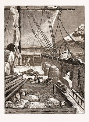 Arctic Drawing - The Arctic Expedition Esquimaux Dogs On The Deck by Litz Collection