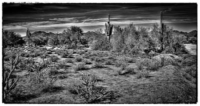 Photograph - The Arizona Landscape by David Patterson