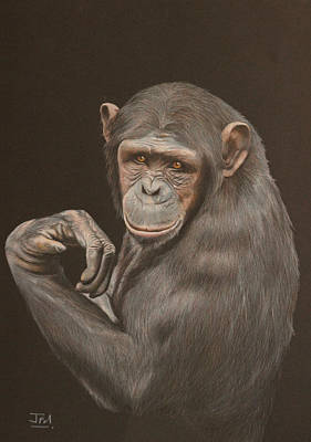 Endangered Drawing - The Arm Wrestler - Chimpanzee by Jill Parry