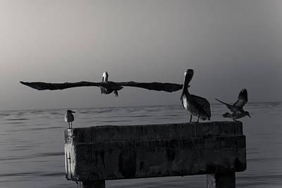 Photograph - The Art Of Flight II by Scott Meyer