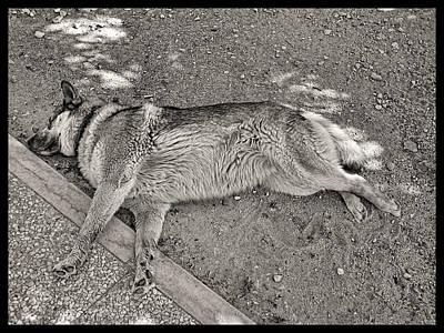 Photograph - The Art Of Relaxed Sleeping by Menega Sabidussi