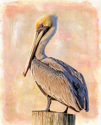 Birds - The Artful Pelican Art Print by HH Photography of Florida