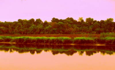 Photograph - The Ashley River by Randall Weidner