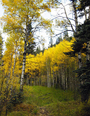 Aspen Photograph - The Aspen Stand by Kurt Van Wagner