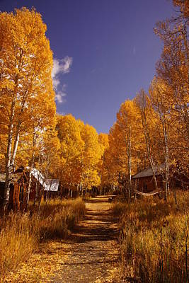 Photograph - The Aspen Trail by Michael Courtney