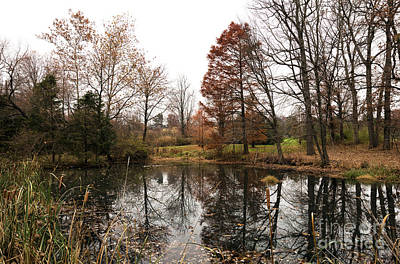 Photograph - The Autumn Pond by John Rizzuto